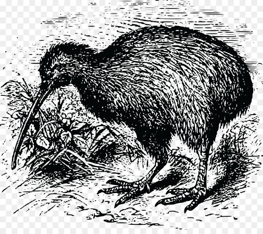 Descarga gratuita de Nueva Zelanda, Pájaro, El Sur De Brown Kiwi imágenes PNG