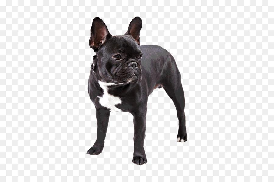 Descarga gratuita de Bulldog Francés, Bulldog, Dachshund Imágen de Png
