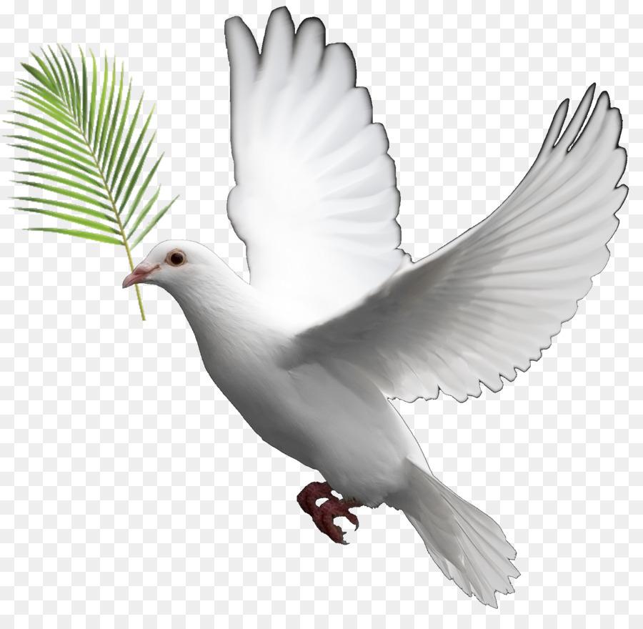 Descarga gratuita de Paloma Nacional, Columbidae, Las Palomas Como Símbolo Imágen de Png