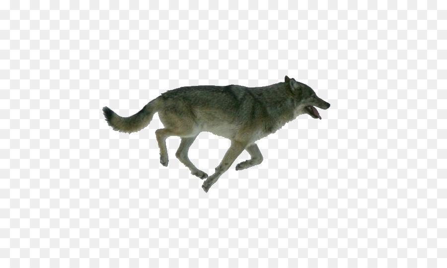 Descarga gratuita de Perro, Isle Royale, El Lobo ártico imágenes PNG