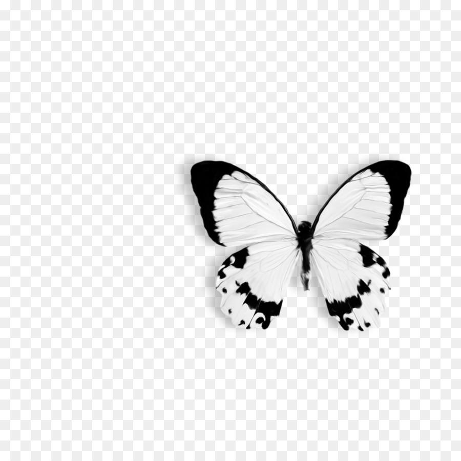 Descarga gratuita de Mariposa, Papilio Dárdano, Dibujo imágenes PNG