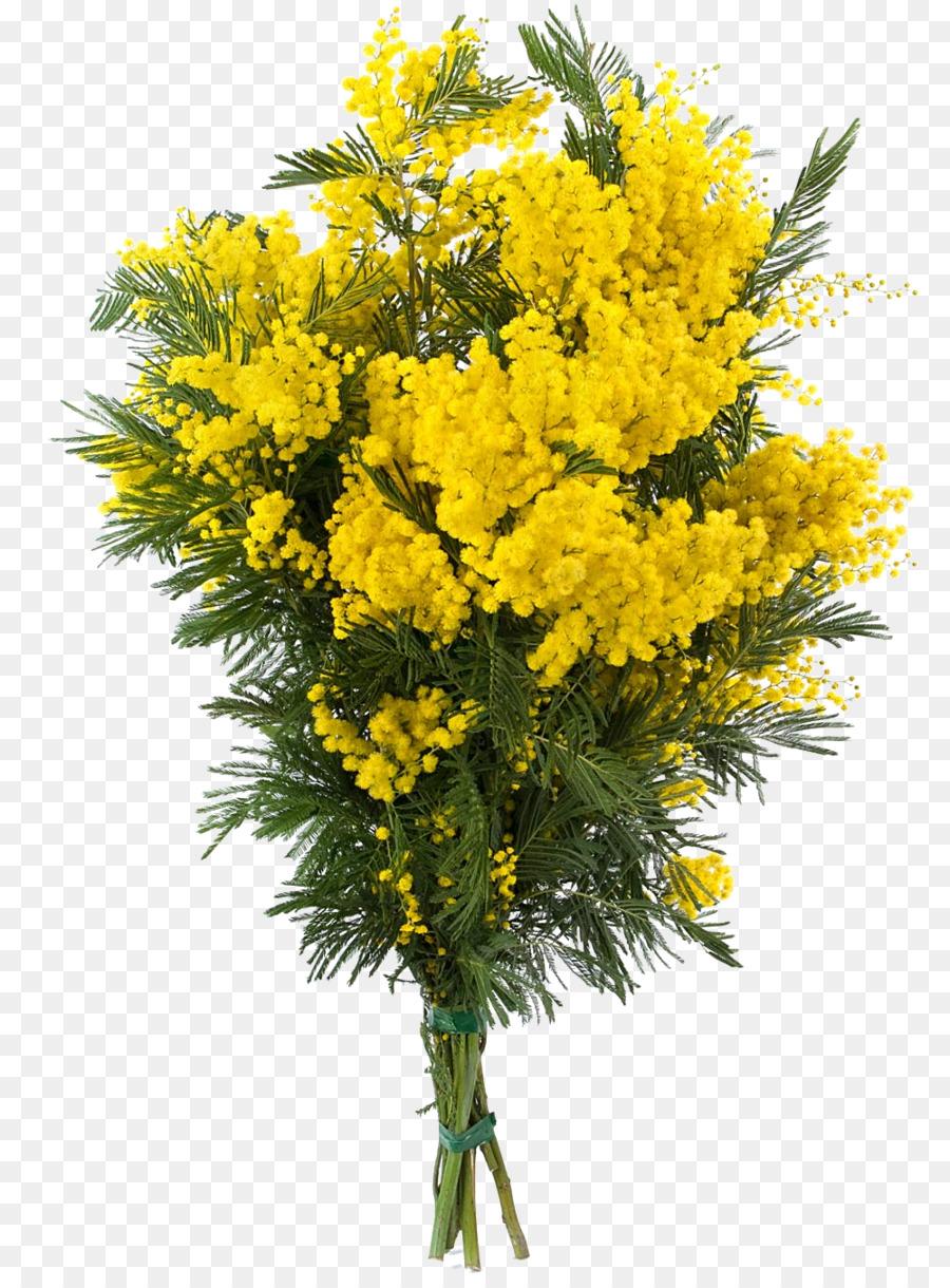 Descarga gratuita de Acacia Dealbata, Mimosa, Acacia imágenes PNG