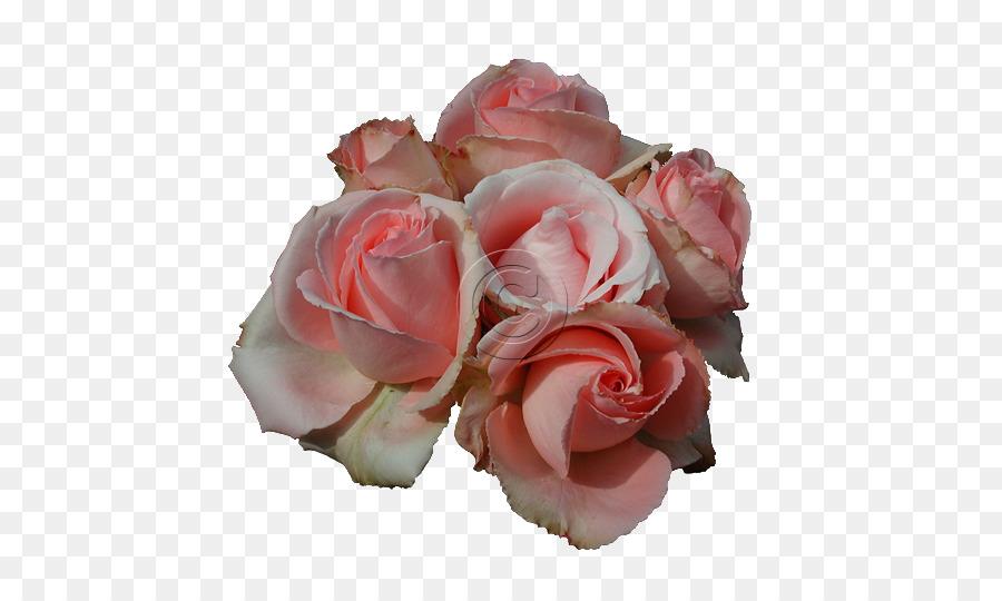 Descarga gratuita de Rosa, Flor, Flores De Color Rosa imágenes PNG