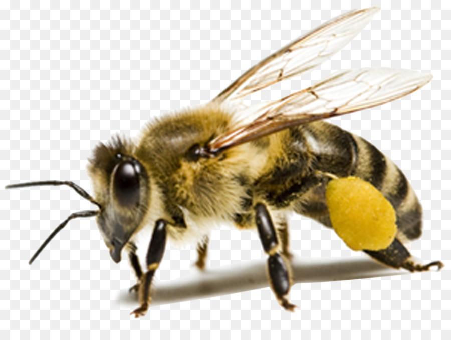 Descarga gratuita de Abeja, Los Insectos, Ant Imágen de Png