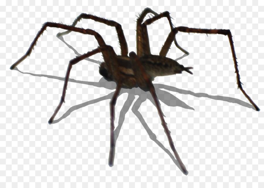 Descarga gratuita de Araña, Los Insectos, Arañas De La Viuda Imágen de Png