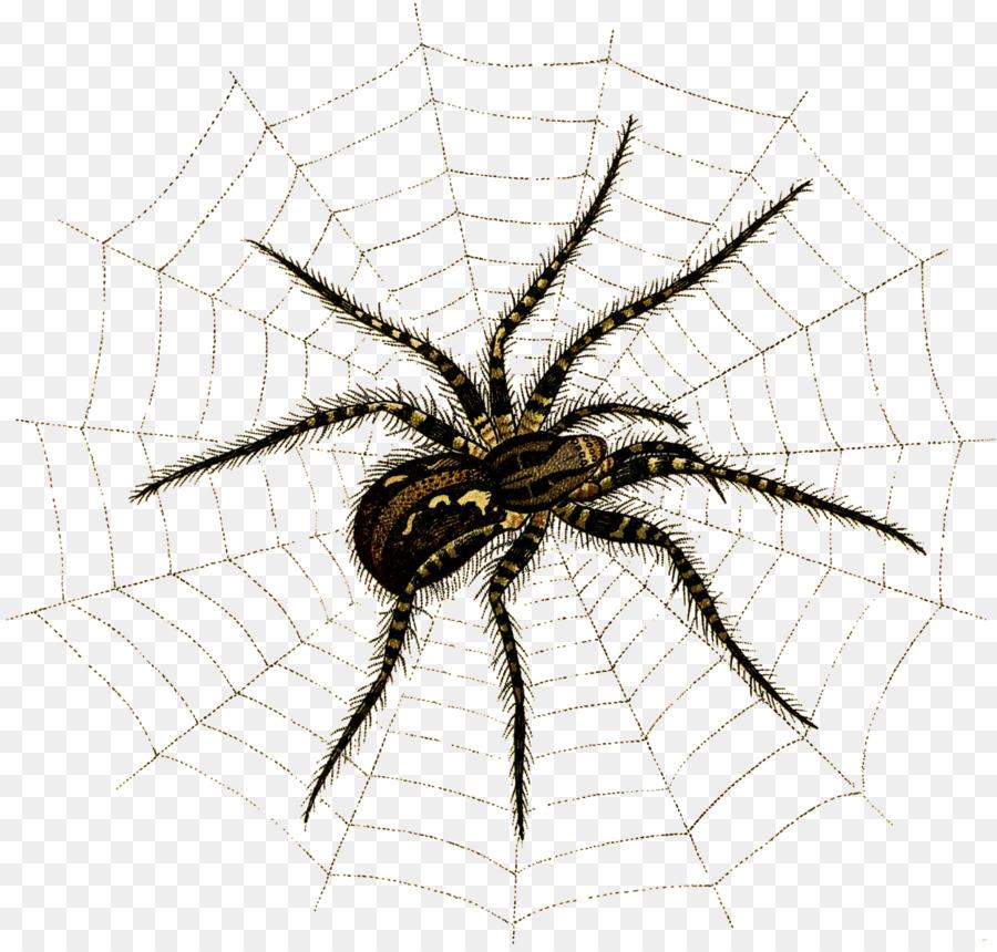 Descarga gratuita de Araña, Angulate Orbweavers, Los Insectos Imágen de Png