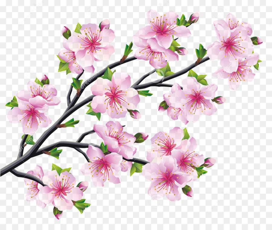 Descarga gratuita de De Los Cerezos En Flor, Flor, Dibujo imágenes PNG