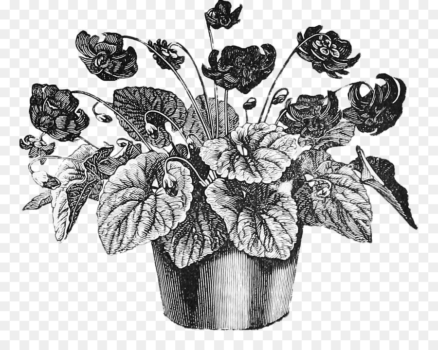 Descarga gratuita de Dibujo, Planta, Flor imágenes PNG
