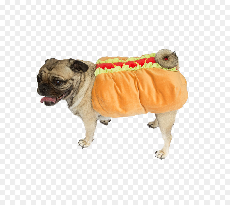 Descarga gratuita de Pug, Perro Caliente, Mascota Imágen de Png