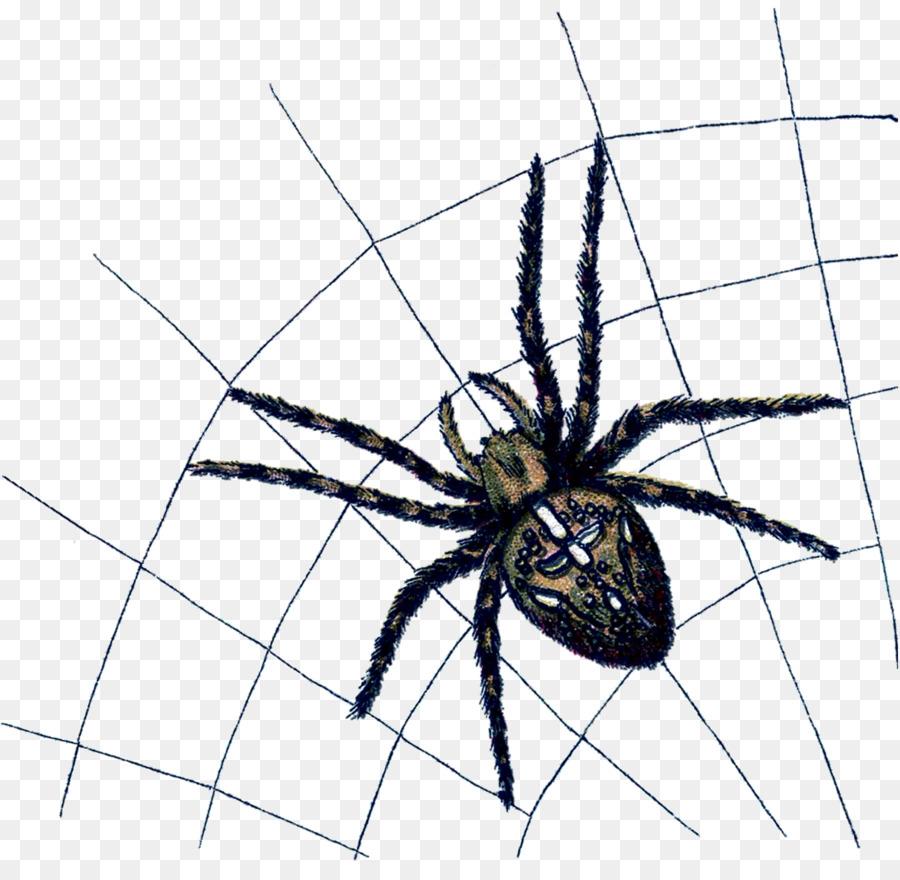 Descarga gratuita de Araña, Arañas De La Viuda, Angulate Orbweavers Imágen de Png
