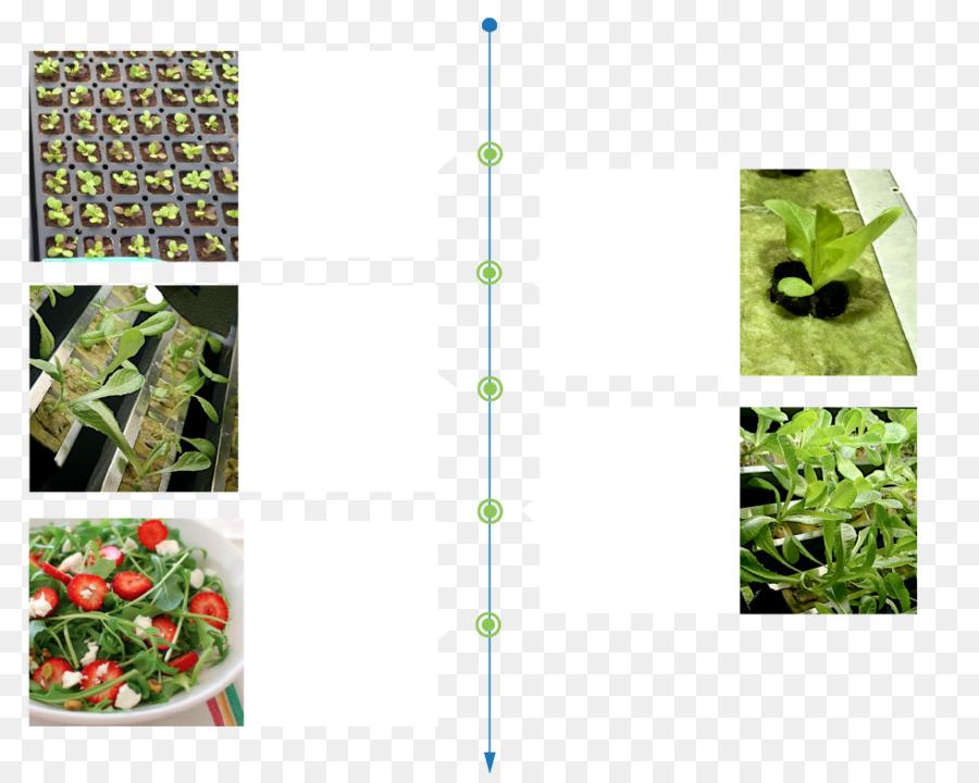 Descarga gratuita de Fertilizantes, Alimentos Orgánicos, Sistema De Imágen de Png