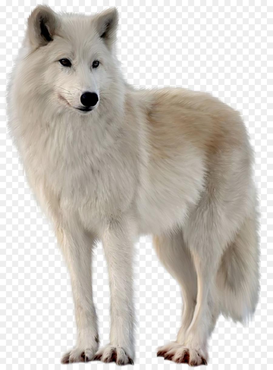 Descarga gratuita de Perro De Groenlandia, Tundra De Alaska Lobo, Zorro ártico Imágen de Png