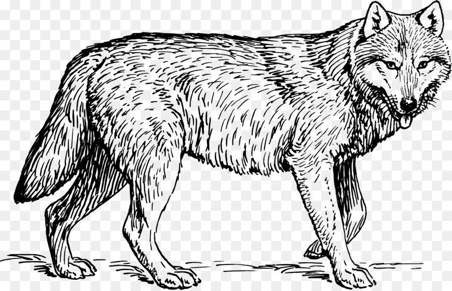Descarga gratuita de Dibujo, El Lobo ártico, Lobo Negro imágenes PNG