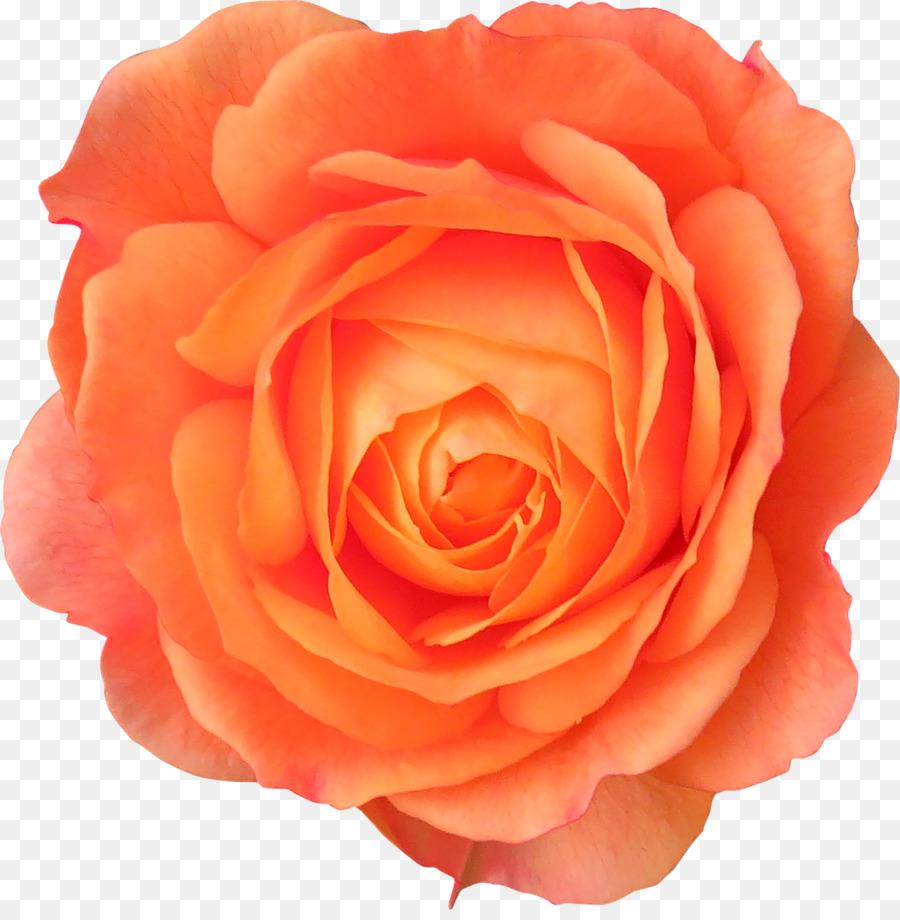 Descarga gratuita de Flor, Las Rosas De Jardín, Las Flores Cortadas Imágen de Png