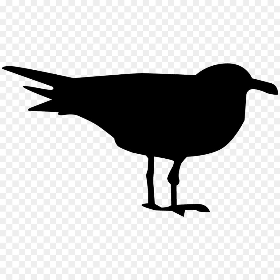 Descarga gratuita de Pájaro, Las Gaviotas, Laboratorio De Ornitología De Cornell Imágen de Png