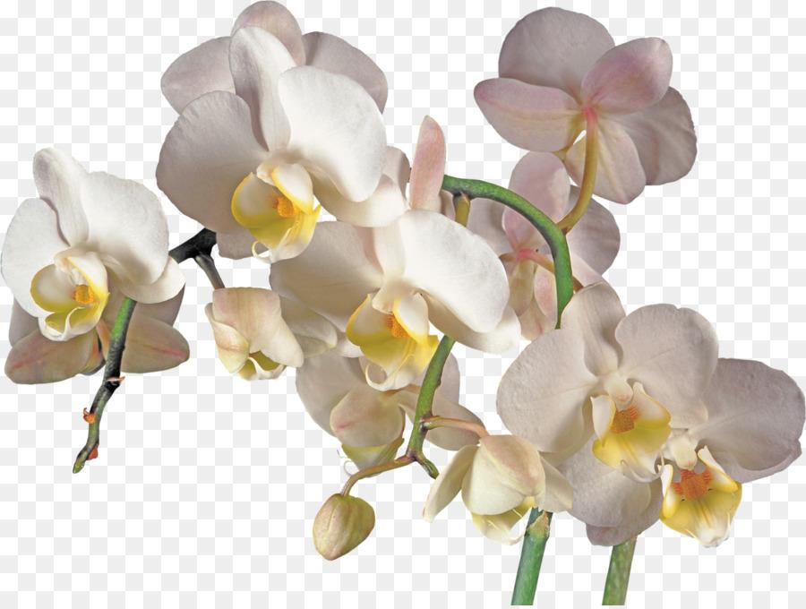 Descarga gratuita de Las Orquídeas, Flor, La Polilla De Las Orquídeas imágenes PNG