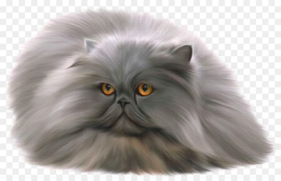 Descarga gratuita de Gato Persa, Ragdoll, British Shorthair imágenes PNG