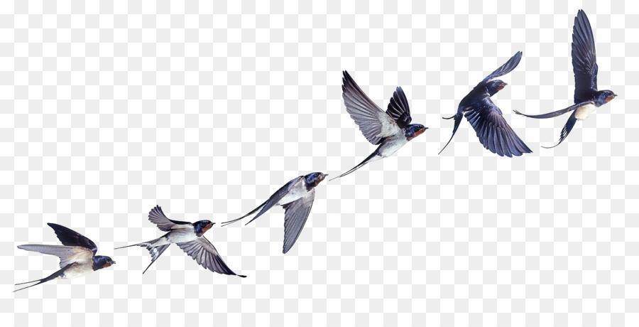 Descarga gratuita de Tragar, Pájaro, Vuelo imágenes PNG