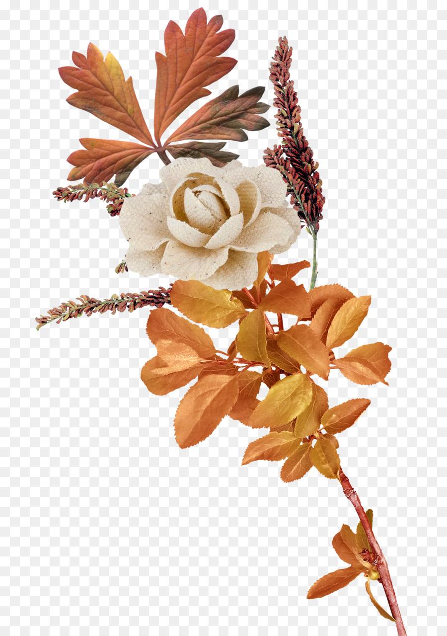 Descarga gratuita de Flor imágenes PNG