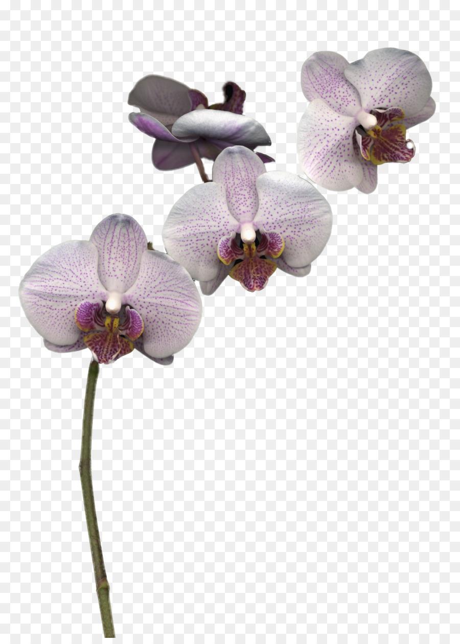 Descarga gratuita de Las Orquídeas, Flor, Las Flores Cortadas imágenes PNG