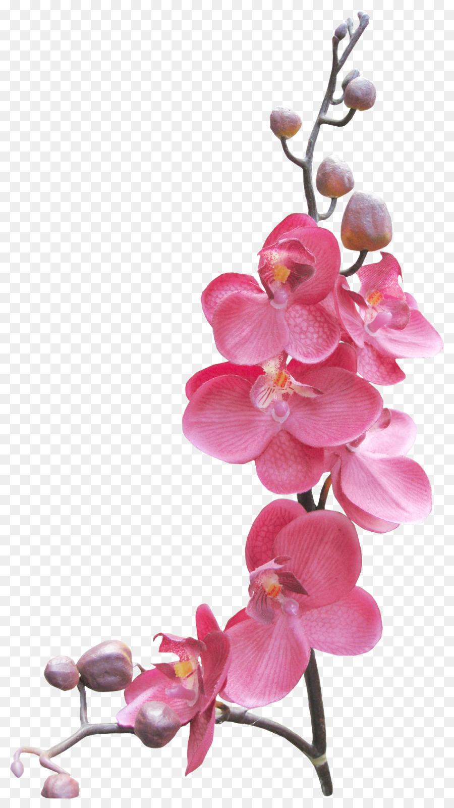 Descarga gratuita de Marcos De Imagen, La Fotografía, Dibujo imágenes PNG