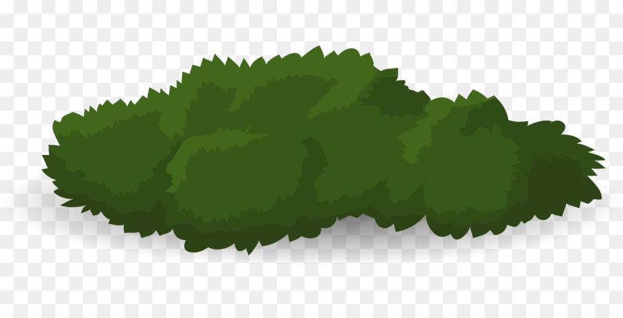 árbol Arbusto De Dibujo Los Arbustos