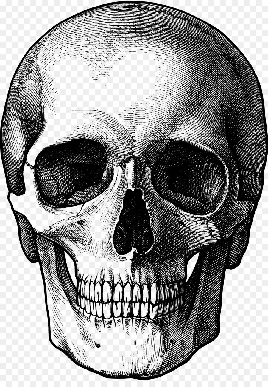 Descarga gratuita de Dibujo, Cráneo, Cosas Divertidas Para Dibujar Imágen de Png
