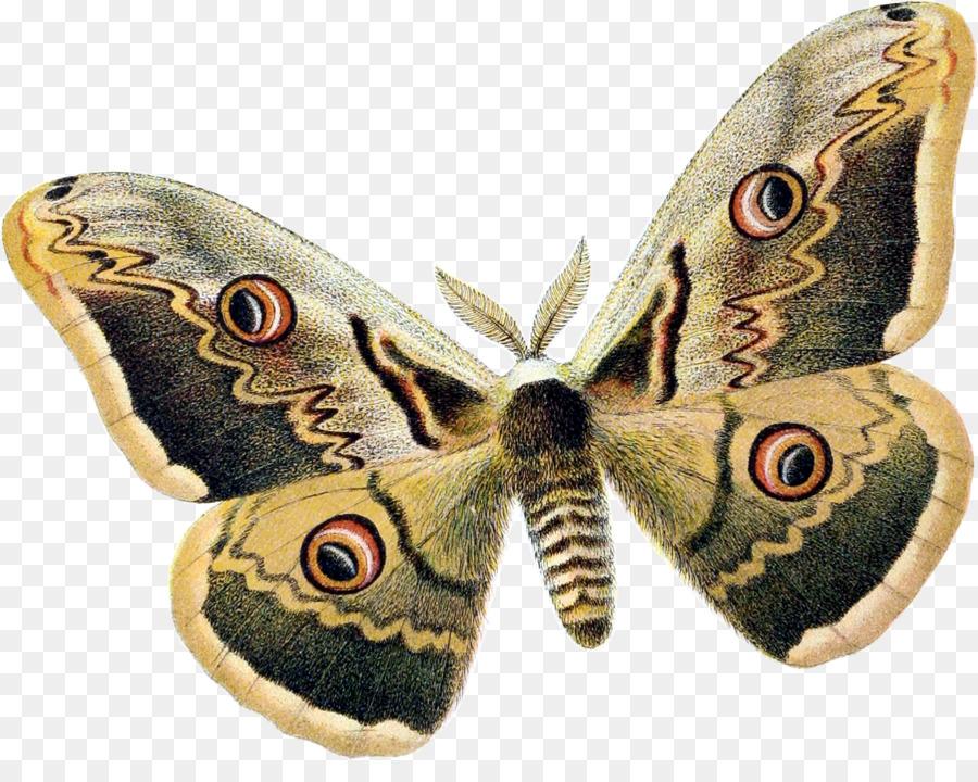 Descarga gratuita de Mariposa, Los Insectos, La Polilla imágenes PNG