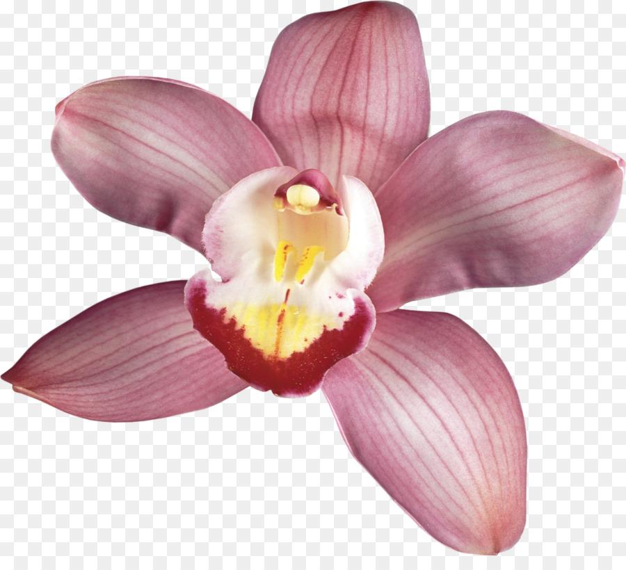 Descarga gratuita de Las Orquídeas, Flor, La Fotografía imágenes PNG