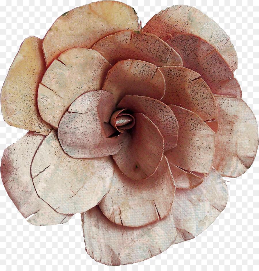 Descarga gratuita de Flor, 28 De Junio De, Las Flores Cortadas imágenes PNG