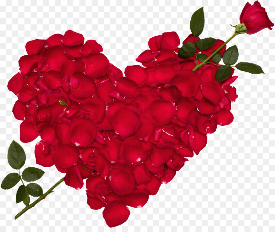 Descarga gratuita de Rosa, El Amor, Flor Imágen de Png