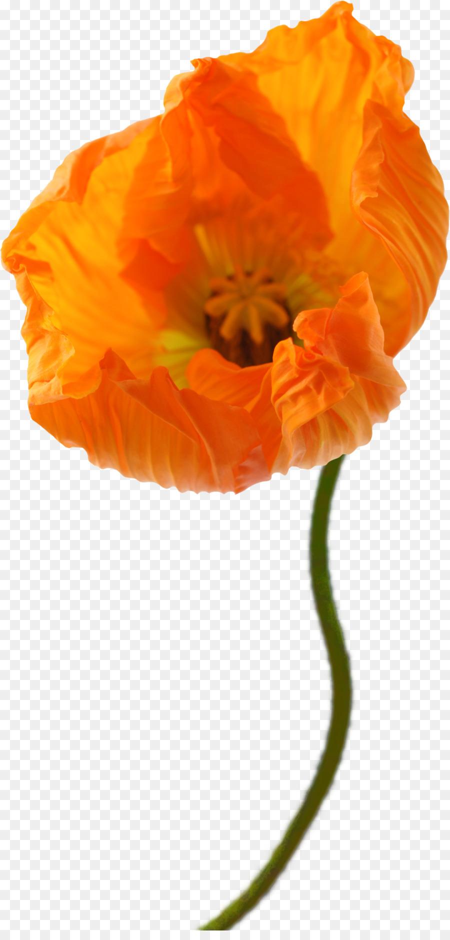 Descarga gratuita de Pintura A La Acuarela, Acuarela De Flores, Dibujo imágenes PNG