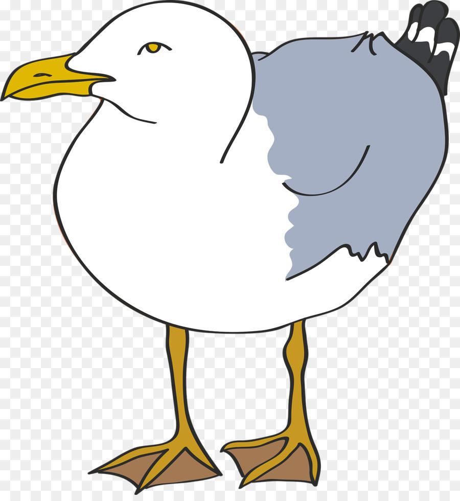 Descarga gratuita de Pájaro, Europea De La Gaviota, Común Gaviota Imágen de Png