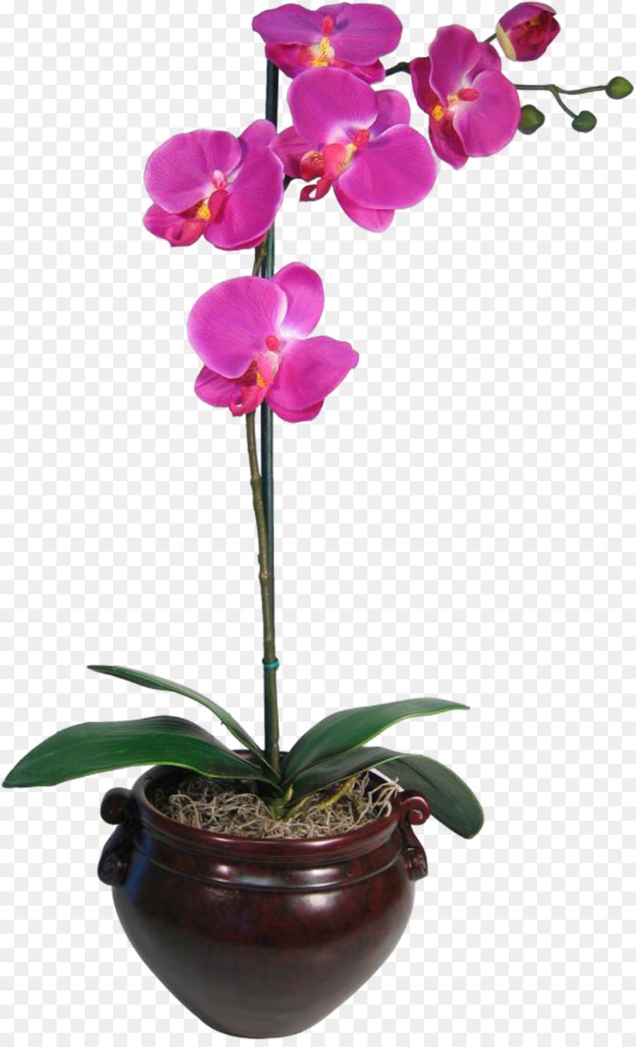 Descarga gratuita de Las Orquídeas, La Polilla De Las Orquídeas, Flor imágenes PNG