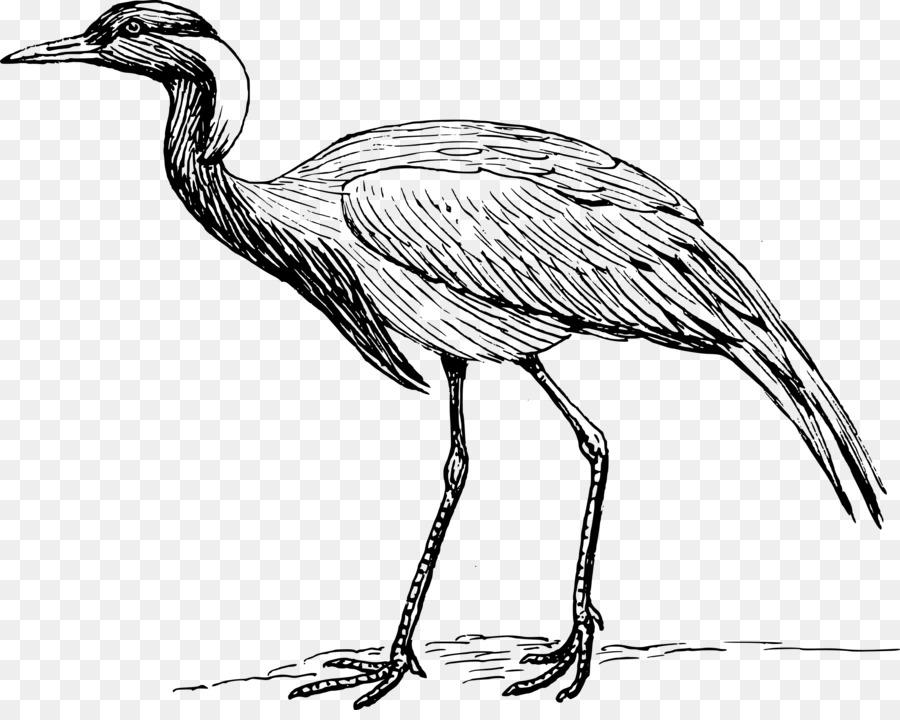 Descarga gratuita de Grúa, Pájaro, Redcrowned De La Grúa Imágen de Png