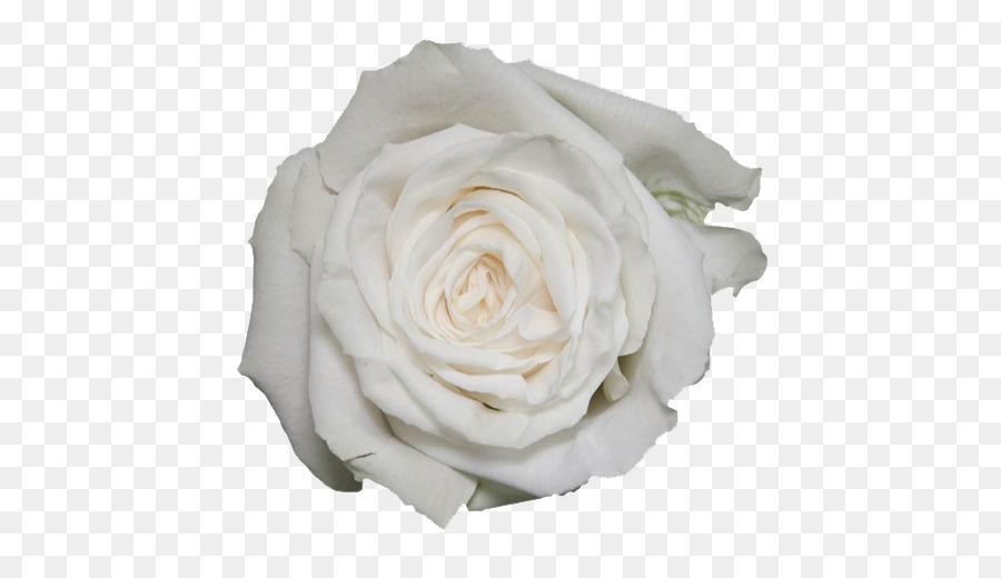 Descarga gratuita de Las Rosas De Jardín, Blanco, Playa Imágen de Png
