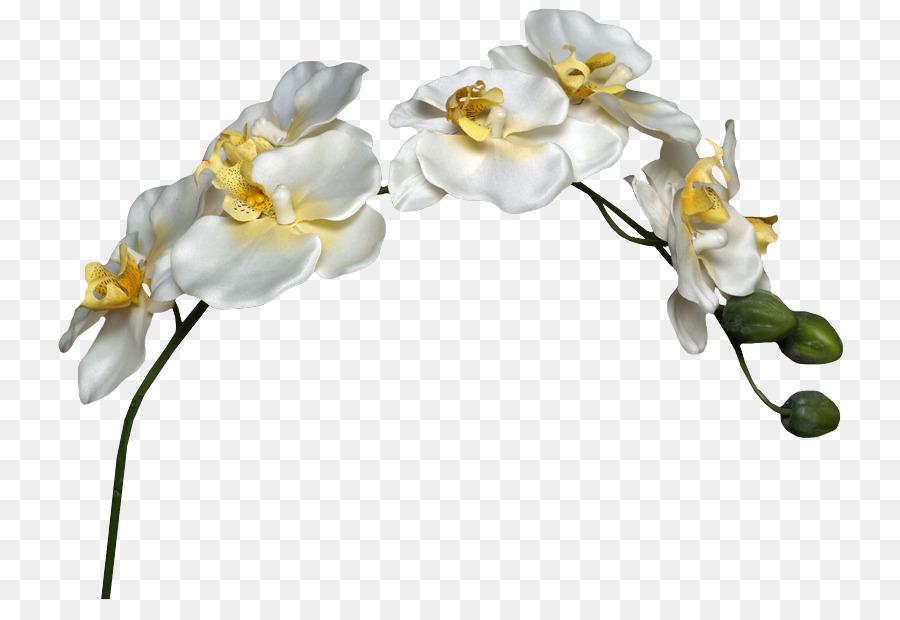 Descarga gratuita de Bakú La Fiesta De Las Flores, Dibujo, La Fotografía imágenes PNG