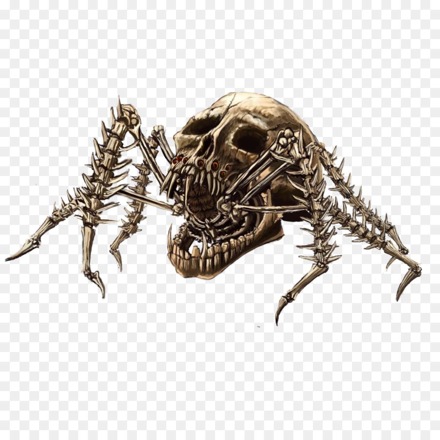 Descarga gratuita de Araña, Tela De Araña, Cráneo Imágen de Png