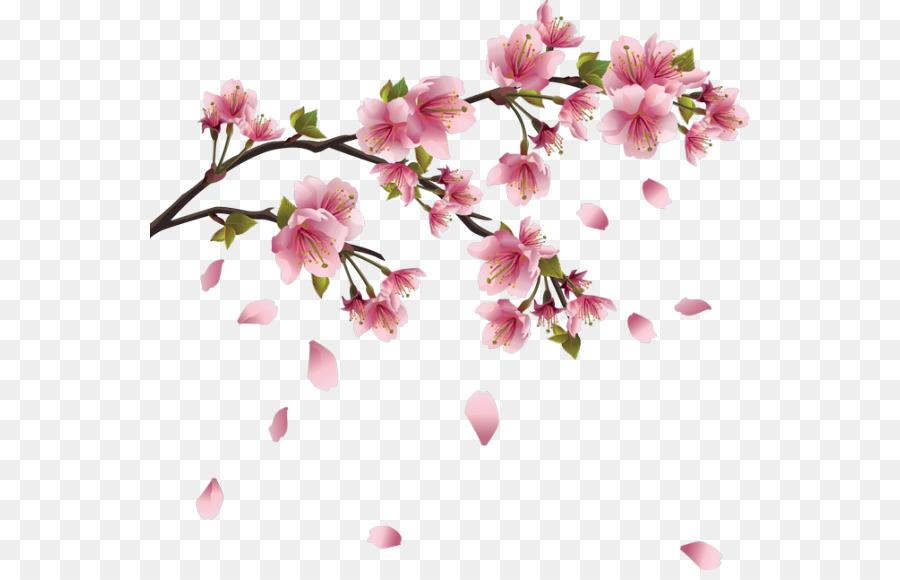 Descarga gratuita de Flor, De Los Cerezos En Flor, Cherry Imágen de Png