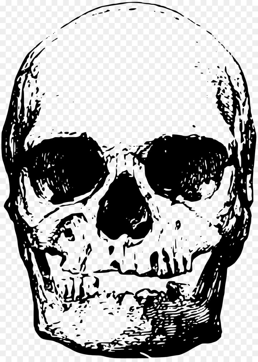 Descarga gratuita de Esqueleto, Hueso, Cráneo Imágen de Png