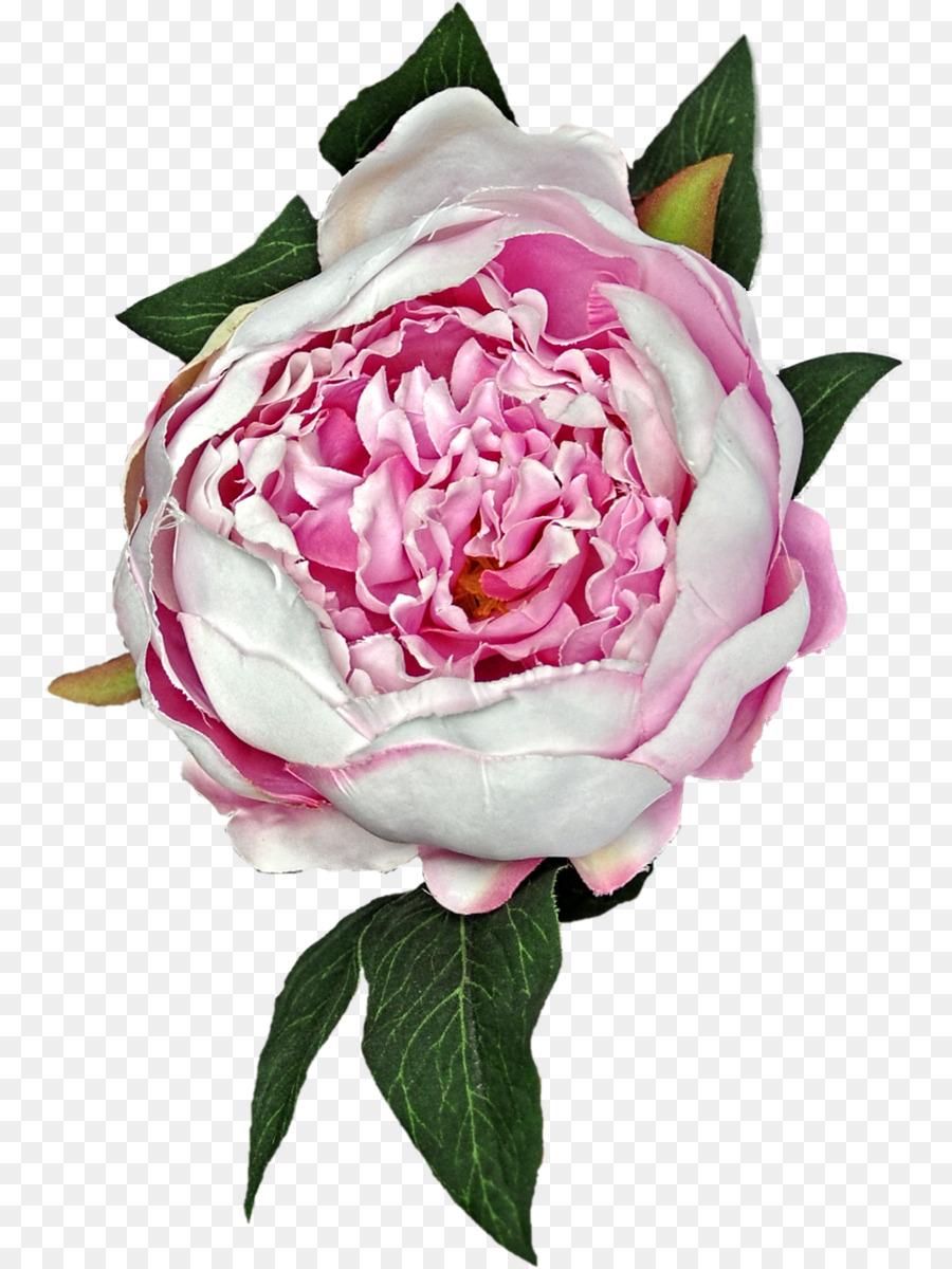 Descarga gratuita de Rosas Centifolia, Las Rosas De Jardín, Flor imágenes PNG