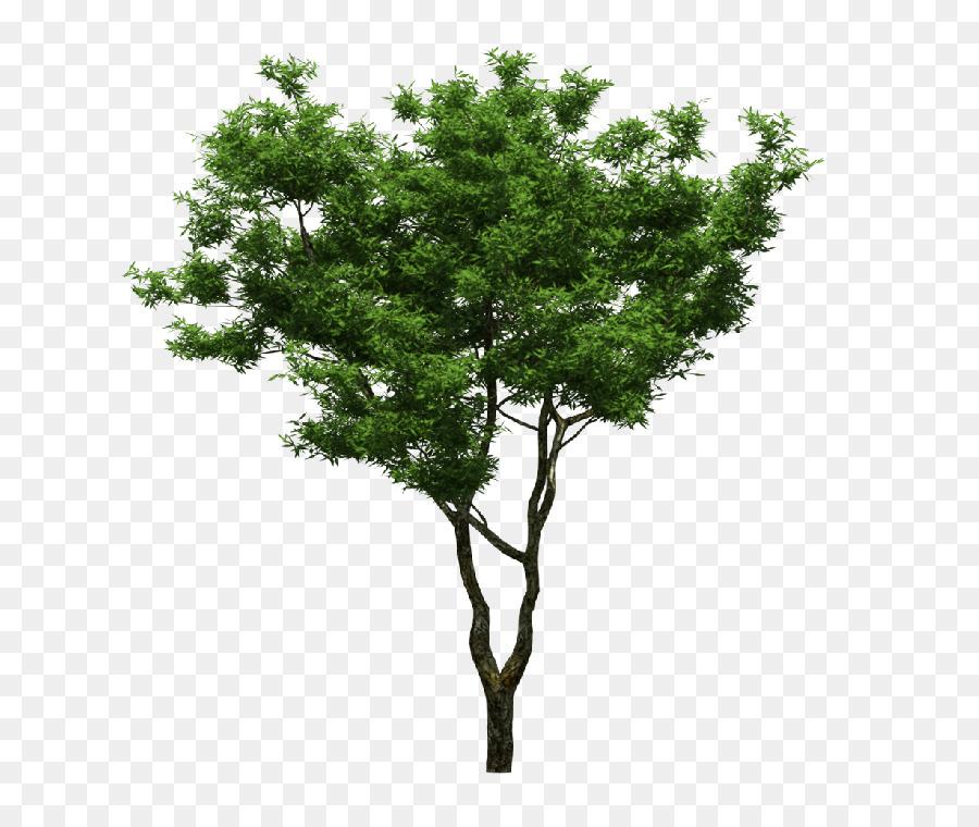 Descarga gratuita de Una Fotografía De Stock, Descargar, árbol imágenes PNG