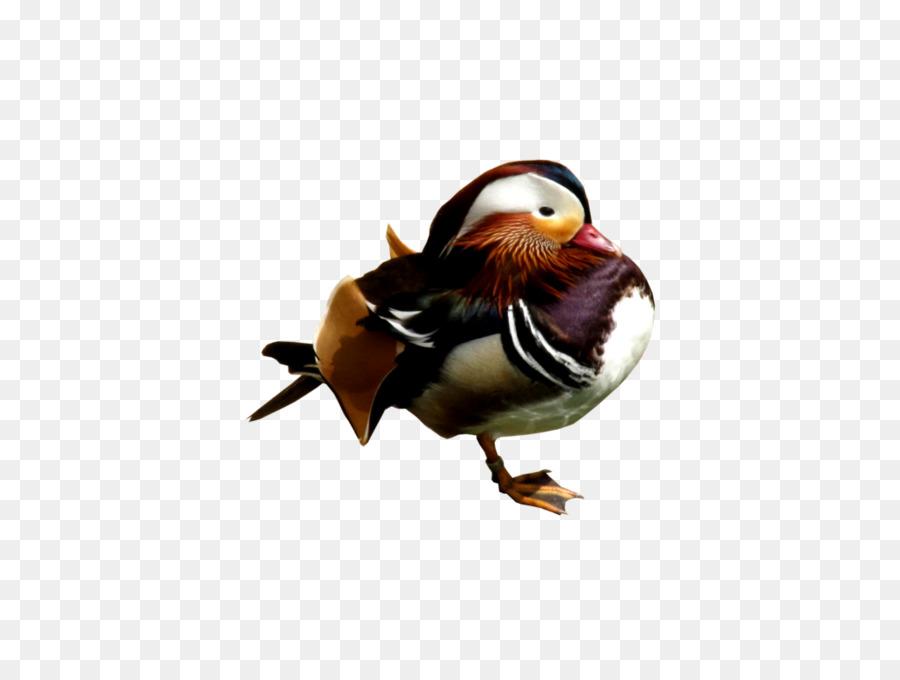 Descarga gratuita de Pato, Pato Mandarín, Pájaro Imágen de Png