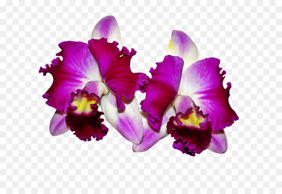 Descarga gratuita de Las Orquídeas, Flor, Fondo De Escritorio Imágen de Png