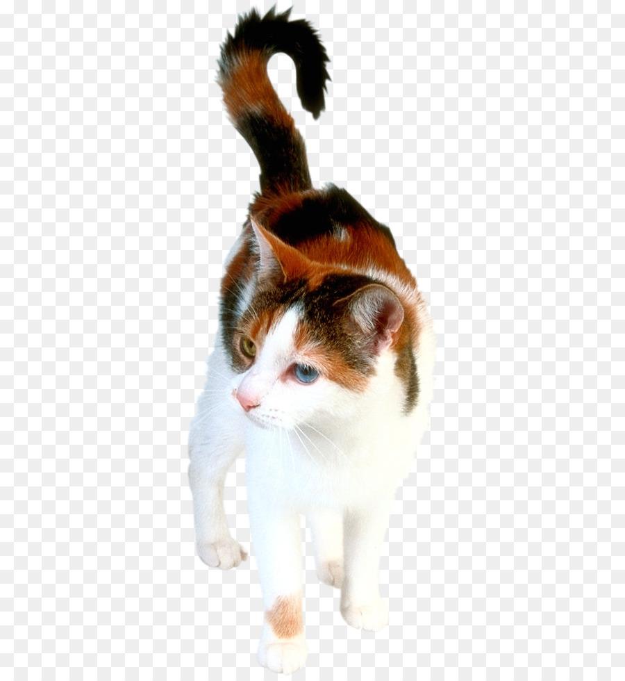 Descarga gratuita de Gatito, Gato Himalaya, Angora Turco imágenes PNG