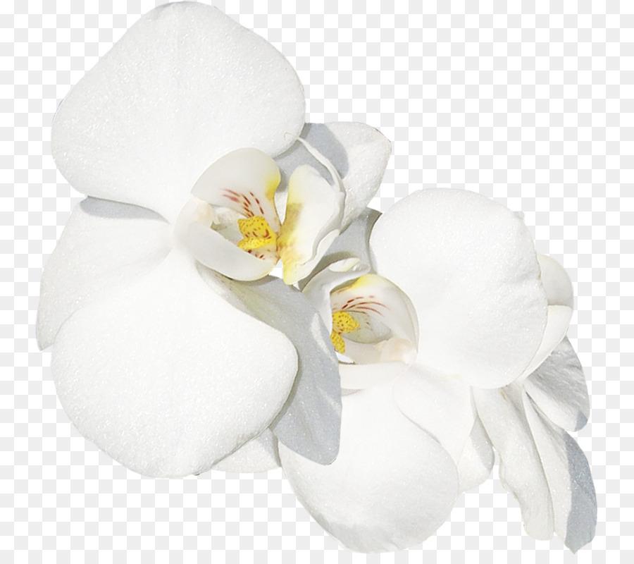 Descarga gratuita de La Polilla De Las Orquídeas, Las Orquídeas, Las Flores Cortadas Imágen de Png