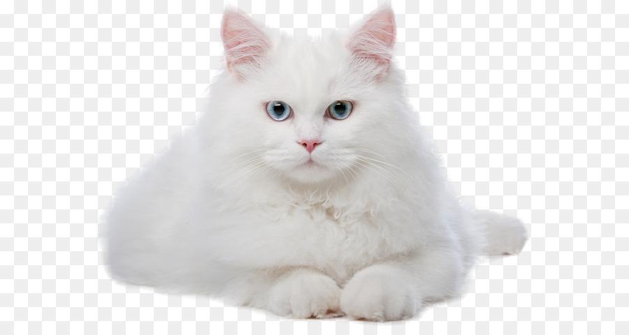 Descarga gratuita de Gato, Gatito, Veterinario imágenes PNG