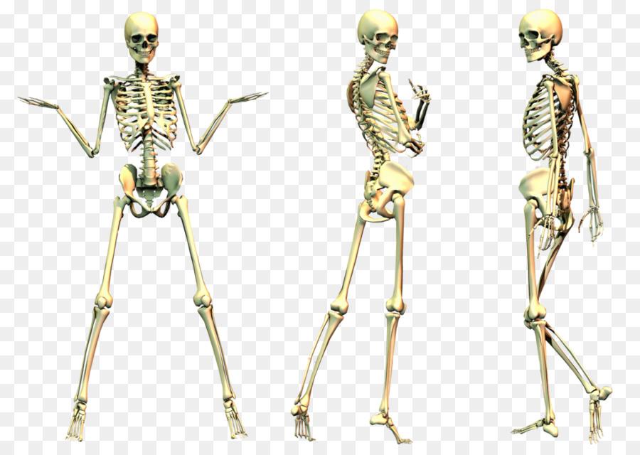 Descarga gratuita de Esqueleto Humano, Esqueleto, Hueso Imágen de Png