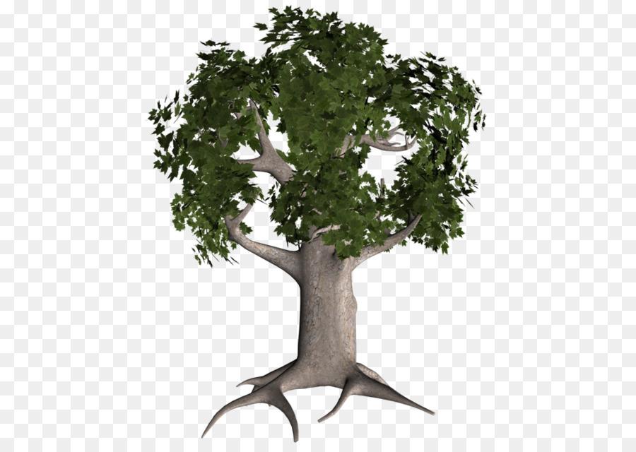 Descarga gratuita de Rama, árbol, Tronco imágenes PNG