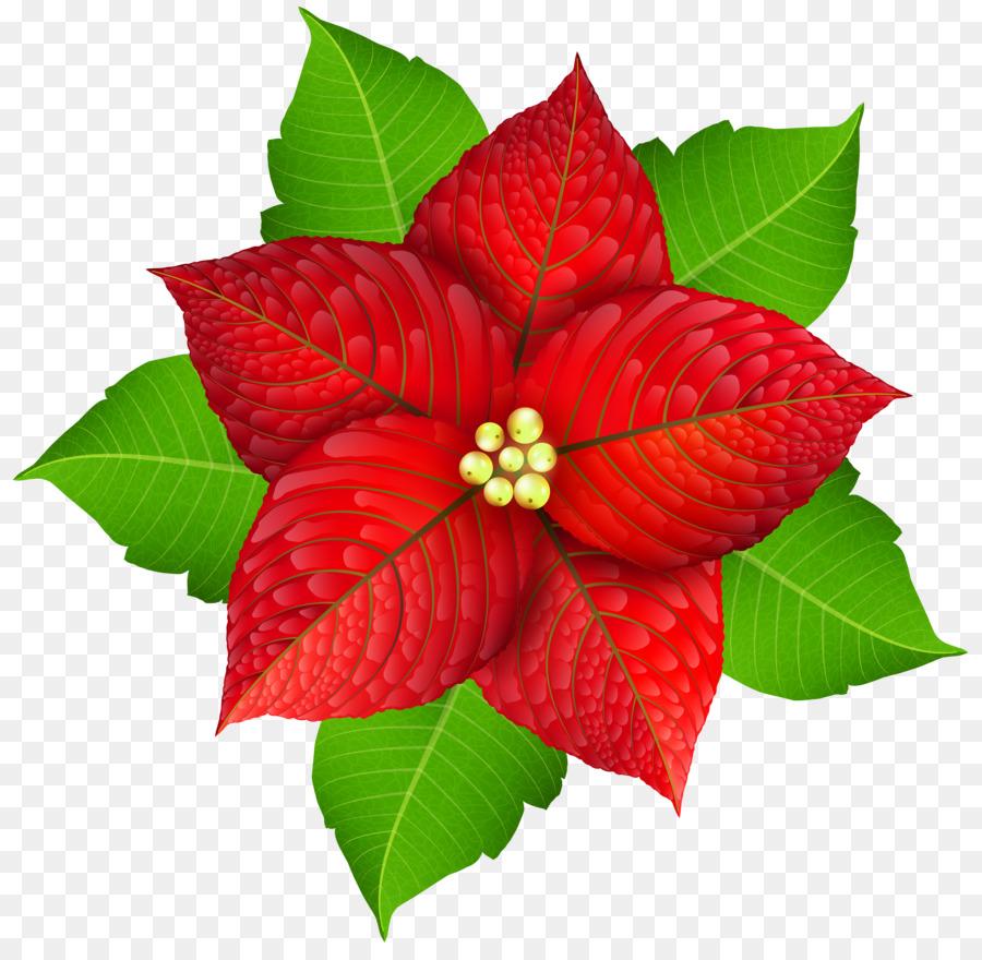 Descarga gratuita de La Flor De Pascua, La Navidad, Flor Imágen de Png